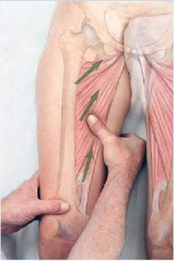 Как массаж влияет на мышцы и связки?
